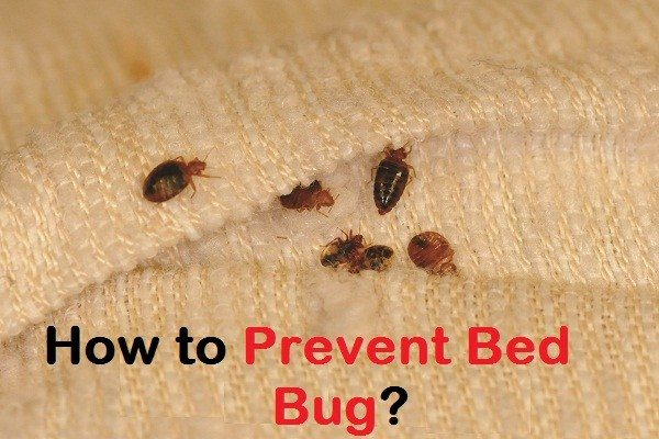 10 Easy Tips to Prevent Bed Bugs