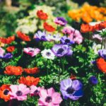 Best Plants for a Shade Garden in Texas